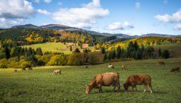 wycieczka po Słowacji - Liptowski Jan